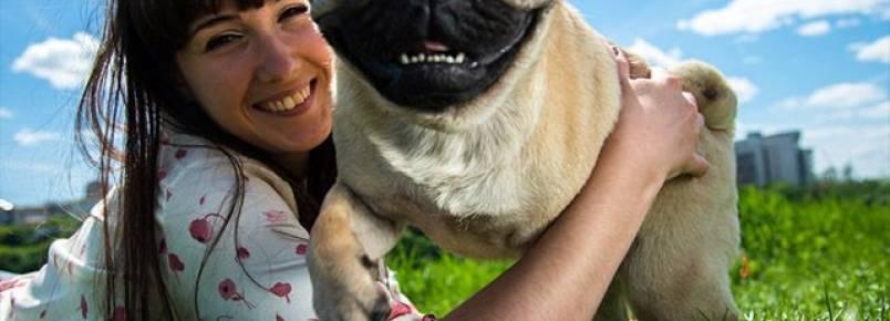 Quais doenças podemos transmitir para os cães