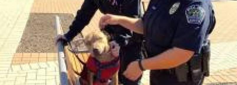 Policiais usam seu horário de almoço para passear com cães de abrigo