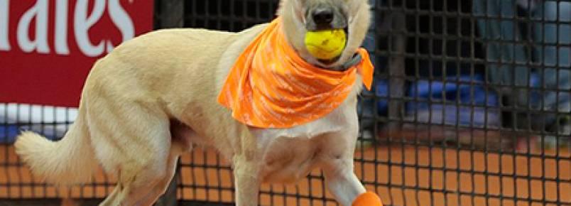 """Cachorros abandonados viram """"cãodulas"""" no Brasil Open de Tênis"""