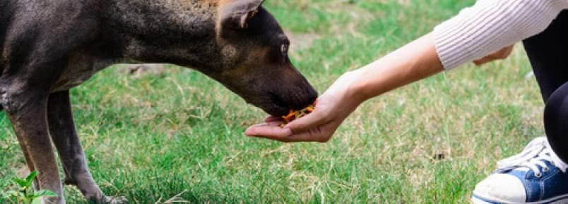 Menino que resgata cães de rua sonha em ter seu próprio abrigo
