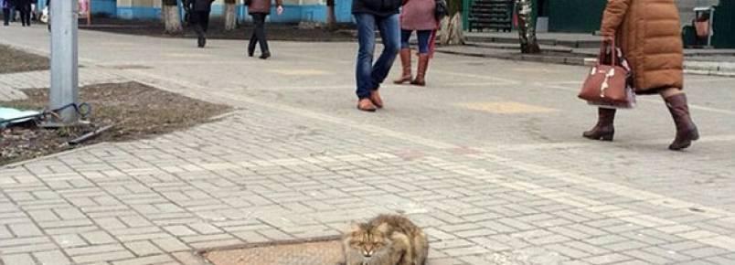 Deixado para trás, gato espera pelos donos no mesmo local por um ano