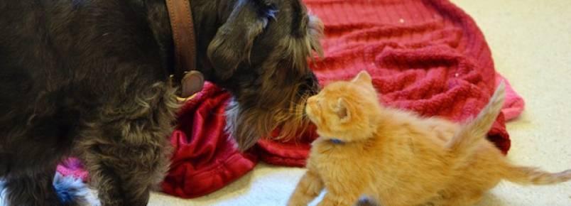 Cachorra resgatada cuida de gatinhos órfãos e doa sangue para salvar vidas