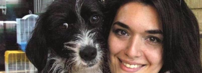 Nova lei da Turquia obriga as pessoas a fazerem curso antes de tutelar um animal