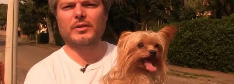 Polícia busca dono de cachorro encontrado em carro roubado