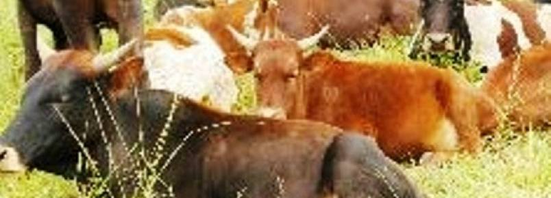 Aprovada lei inédita contra caça em Mogambique