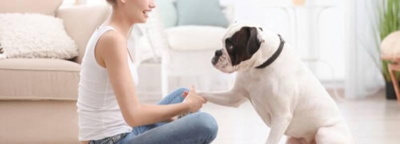 Adestramento durante a quarentena: dicas para os donos de animais