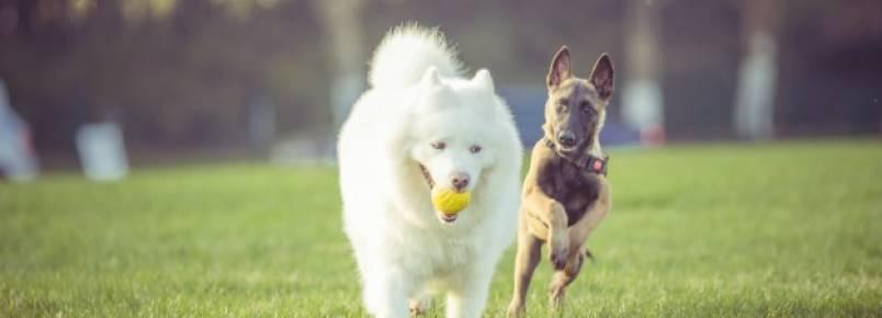 Alimentos prejudiciais para cachorro – Quais são?