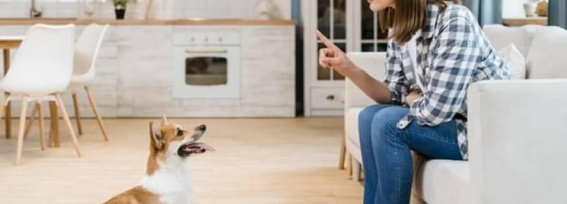 Quais são os principais tipos de adestramento canino?