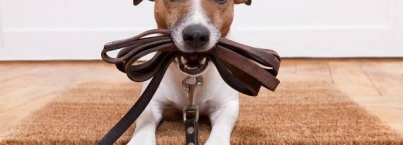 Cresce a procura de imóveis que aceitam animais de estimação