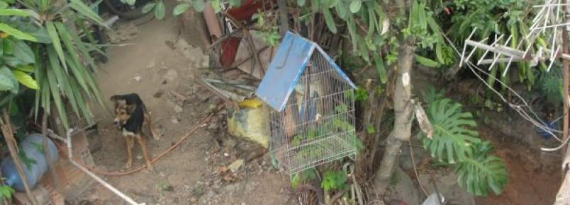 Moradores denunciam maus tratos a animais