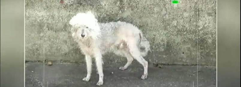 Cachorro abandonado ganha nova família e visual novo