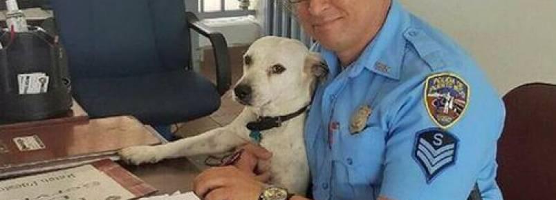 Um cão de rua entra em uma delegacia e se torna policial