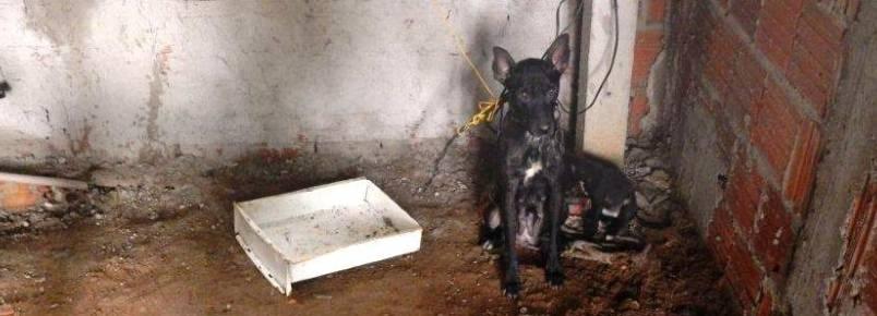 Homem é multado em R$ 9 mil acusado de maltratar três cães em Lins