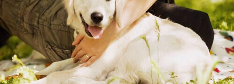 Os cães são pedaços de nossa felicidade