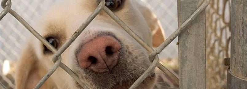 Fique por dentro dos eventos de adoção de animais no RJ