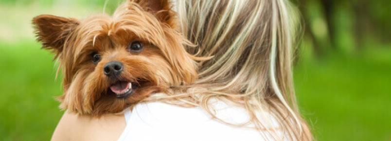 Como saber se seu cão te ama loucamente