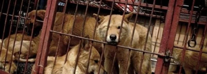 Maior mercado de carne de cachorro da Coreia do Sul será fechado