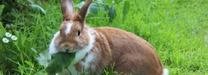 Alimentos perigosos para coelhos