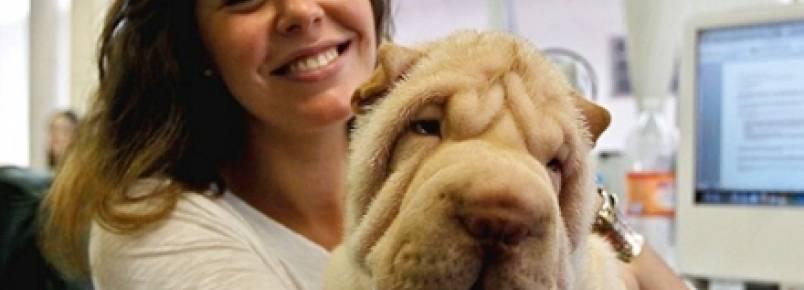 Abrigo leva animais a escritórios para diminuir o estresse dos funcionários