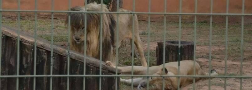 Frequentadores e funcionários denunciam maus-tratos a animais em zoo de SP