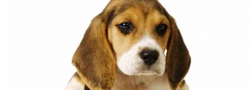 Brasília terá hoje evento para discutir o fim dos testes em animais