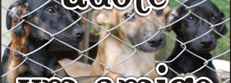 CCZ captura, trata e encaminha animais de rua para adoção