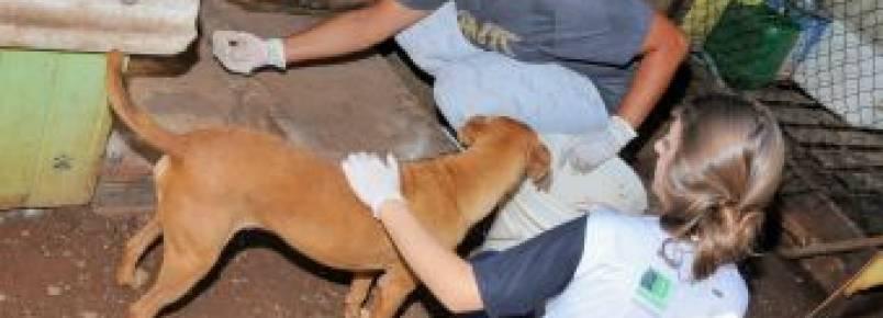 Voluntários zelam pelo bem-estar dos animais