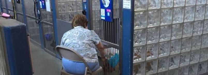 Mulher comove internautas ao ser vista lendo histórias para cães em abrigo de animais