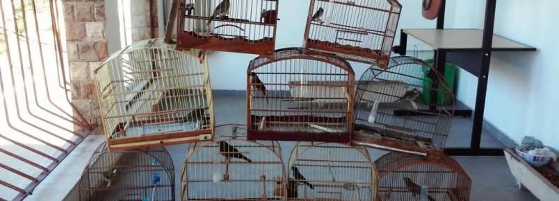 Pássaros silvestres são resgatados em Itapeva (MG)