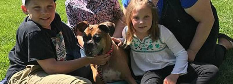 Cadela doente que seria eutanasiada é encontrada pela família em site de adoção