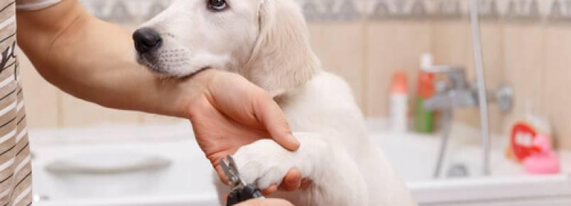 Manicure para cães. Faça em casa!