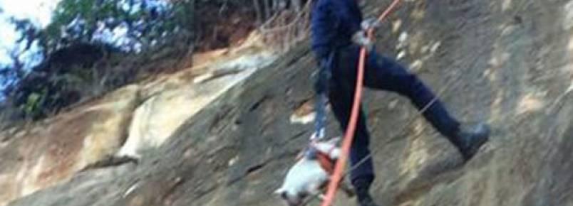 Cão que ficou preso por dois dias em uma pedreira é resgatado pelos bombeiros