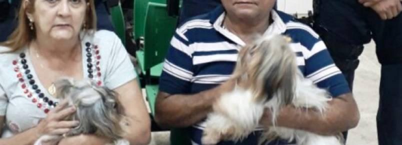 Casal reage durante assalto e os três cães que estavam dentro do carro são levados pelos criminosos