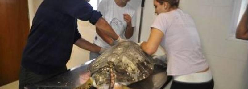 Atendimento a animais marinhos é ampliado na Baixada Santista