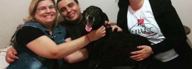 Cachorro que ficou na rua depois que seus tutores faleceram, encontra um novo lar