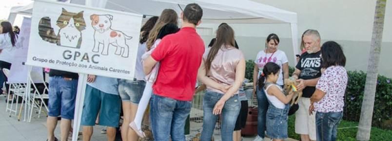 Protetores de animais buscam patrocínio para calendário animal