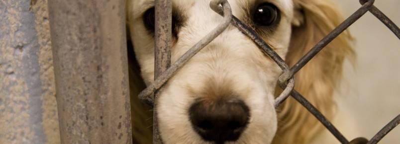Maus-tratos contra animais