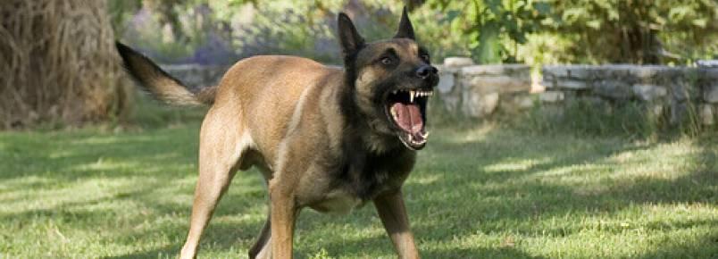 Campanhas contra a raiva nos cães