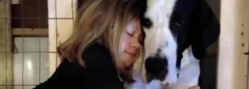 Menina que não conseguia andar ganha mais independência com um grande cão de serviço