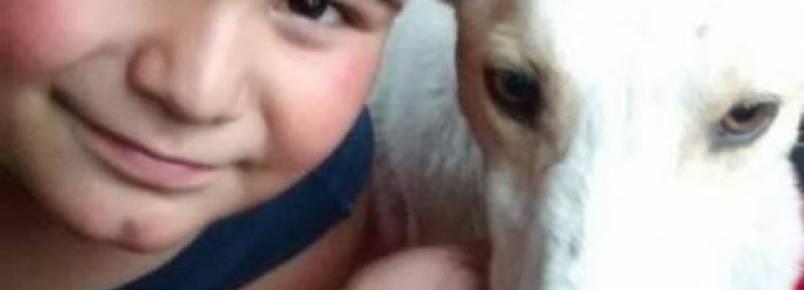 Menino tenta vender seu brinquedo favorito para salvar um cão de rua