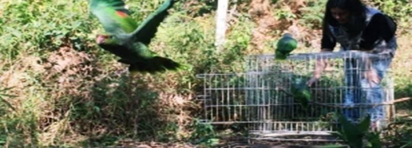 Número de propriedades rurais em Minas que recebem animais silvestres será triplicado