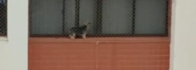 Vídeo flagra cachorro em parapeito de janela de prédio