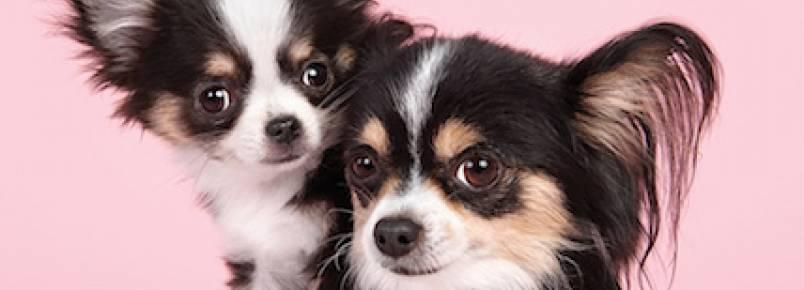 Série fotográfica mostra como é fofa a interação entre cães