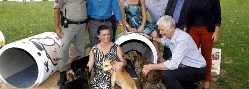Cães comunitários ganham abrigo em praça no bairro Rubem Berta