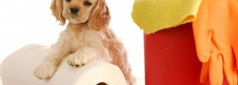6 dicas para tirar cheiro de xixi de cachorro da casa