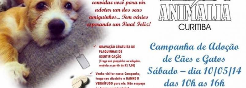 Animalia Curitiba promove campanha de adoção de pets