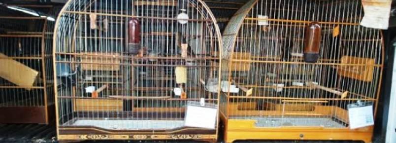 Ibama apreende 35 aves e aplica multa de R$ 200 mil