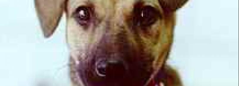 Projeto Vida: Feira de doação de animais