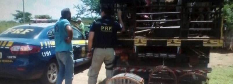 PRF apreende animais silvestres com caminhoneiro na cidade de Valença