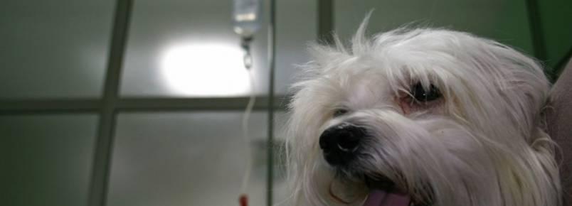 Nova Odessa pode sediar hospital veterinário regional